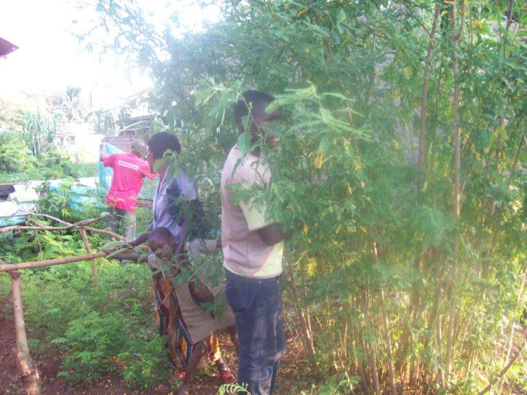 Trees Uganda1